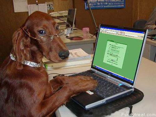 Dog And Laptop.jpg