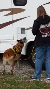 Copper doing K9 Nose Work on an RV